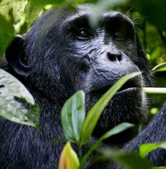 3 DAYS QUEEN ELIZABETH NATIONAL PARK WITH CHIMPANZEE TRACKING